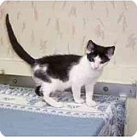 Adopt A Pet :: Ulla - Secaucus, NJ