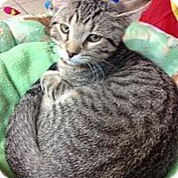 Adopt A Pet :: Oscar - Byron Center, MI
