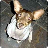 Adopt A Pet :: Bodie - Suffolk, VA