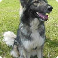 Adopt A Pet :: Dixie - Gary, IN