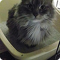 Adopt A Pet :: Smokey - Cleveland, OH