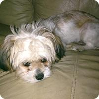 Adopt A Pet :: Angel - Hazard, KY