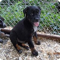 Adopt A Pet :: Diesel - Bedford, VA
