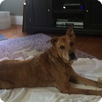 Adopt A Pet :: Watson - Sterling, MA