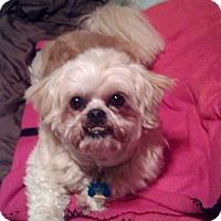 Adopt A Pet :: Carlos - Grover, NC