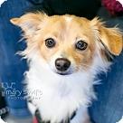 Adopt A Pet :: Joey-ADOPTION PENDING!!