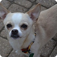 Adopt A Pet :: Higgins - Clarkston, MI