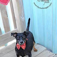 Adopt A Pet :: Beauty - Liberty, MO