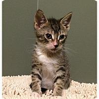 Adopt A Pet :: Hermes - Whitehall, PA