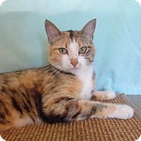 Adopt A Pet :: Miss Kitty - Larned, KS