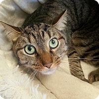Adopt A Pet :: Towers - Shinnston, WV
