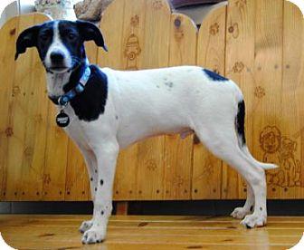 Terrier (Unknown Type, Medium) Mix Puppy for adoption in Parsons, Kansas - Fallon
