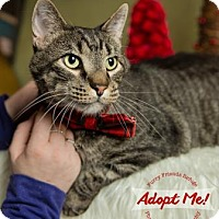 Adopt A Pet :: Snitch - West Des Moines, IA
