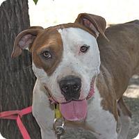Adopt A Pet :: Perfect Patty - Birmingham, AL