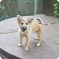 Adopt A Pet :: Butterbean - conroe, TX