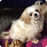 Adopt A Pet :: Rudolph - Overland Park, KS