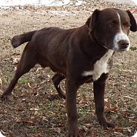 Adopt A Pet :: Blake - Hartford, CT