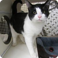 Adopt A Pet :: Waldo - Kingston, WA