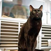 Adopt A Pet :: Marsellus - Los Angeles, CA