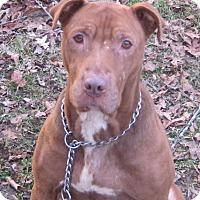 Adopt A Pet :: Nibble - Hillsboro, OH