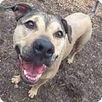 Adopt A Pet :: Niko - Louisville, KY