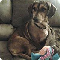 Adopt A Pet :: SOLO - Portland, OR