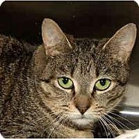 Adopt A Pet :: Shannon - Sacramento, CA