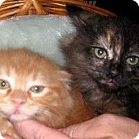 Adopt A Pet :: Clyde (Bonnie and Clyde) - Dallas, TX