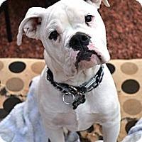 Adopt A Pet :: Bronx - Phoenix, AZ