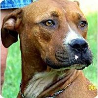 Adopt A Pet :: PRISCILLA - Wakefield, RI