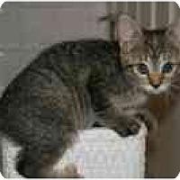 Adopt A Pet :: Juniper - Arlington, VA