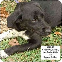 Adopt A Pet :: # 772-08 - ADOPTED! - Zanesville, OH