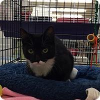Adopt A Pet :: Jill - Kelso/Longview, WA