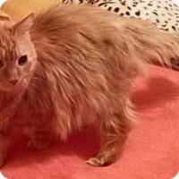 Adopt A Pet :: Hugsley - Ennis, TX