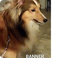 Adopt A Pet :: Banner - COLUMBUS, OH