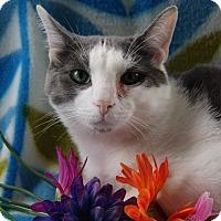 Adopt A Pet :: Tad - Monroe, MI