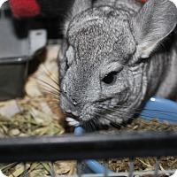 Adopt A Pet :: Elsa - Titusville, FL
