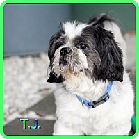 Adopt A Pet :: TJ - Hollywood, FL