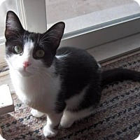 Adopt A Pet :: Suzy Snazzypants - Adopt Pending - Richmond Hill, ON