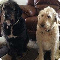 Adopt A Pet :: Brandy & Jasmine *Bonded Pair* - West Allis, WI