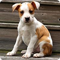 Adopt A Pet :: Jackson~adopted! - Glastonbury, CT