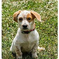 Adopt A Pet :: Swizzle Sticks - Cincinnati, OH