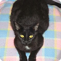 Adopt A Pet :: Sheba - Woodstock, ON