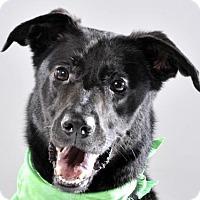 Adopt A Pet :: Jess - Nanuet, NY