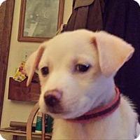 Adopt A Pet :: Teenie - Racine, WI