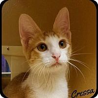 Adopt A Pet :: Cressa (SM) 3.29.16 - Orlando, FL