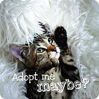 Adopt A Pet :: Mabel - Jacksonville, FL