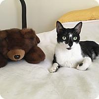Adopt A Pet :: Chanel - Sunny Isles Beach, FL