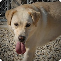 Adopt A Pet :: Opal - Wilmington, OH