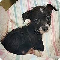 Adopt A Pet :: Coal - Fredericksburg, TX